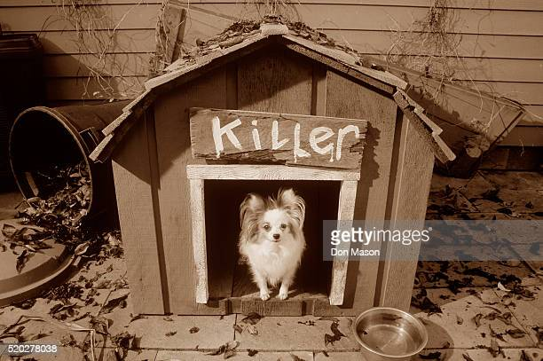 Beware of Small Killer Dog