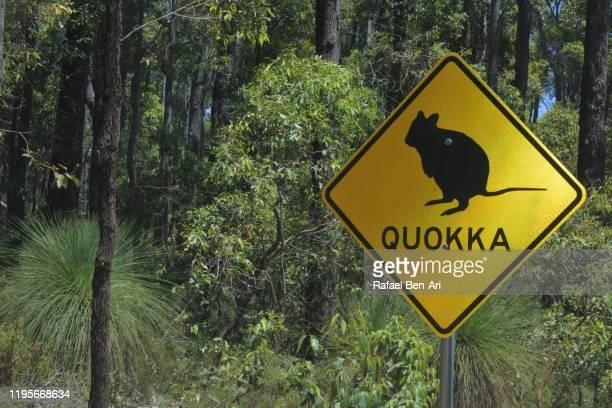 beware of the quokka road sign in australia - quokka photos et images de collection