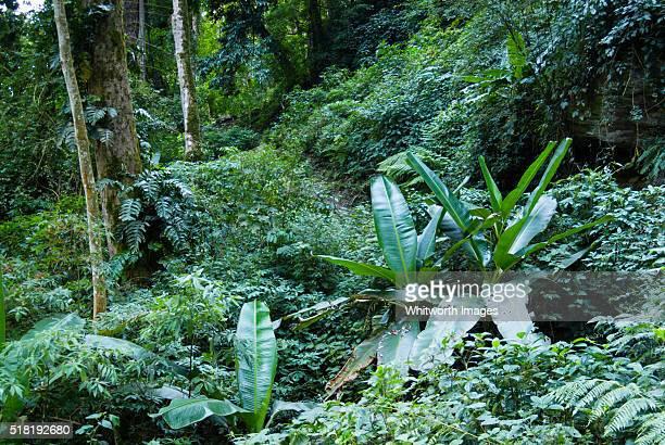 bhutan, trongsa, nabji. lush sub-tropical jungle along nabji-korphu trekking route. - trongsa district stockfoto's en -beelden