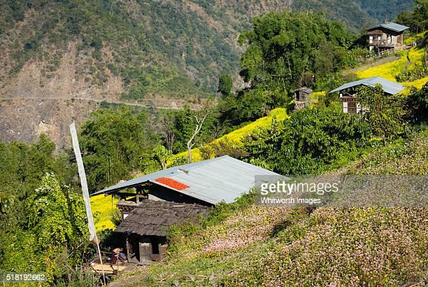 bhutan, trongsa, nimshong. village houses among mustard and buckwheat fields. - trongsa district stockfoto's en -beelden