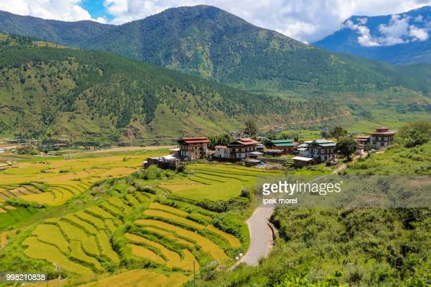 bhutanese village and terraced field at punakha, bhutan - ipek morel stock pictures, royalty-free photos & images