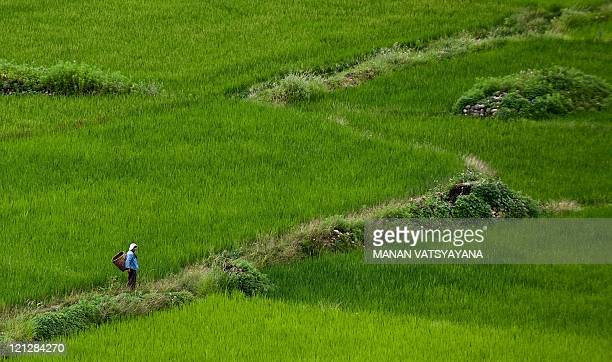 A Bhutanese woman crosses the farming fields at Paro around 50kms from the capital city of Thimphu on August 17 2011 The Kingdom of Bhutan is a small...