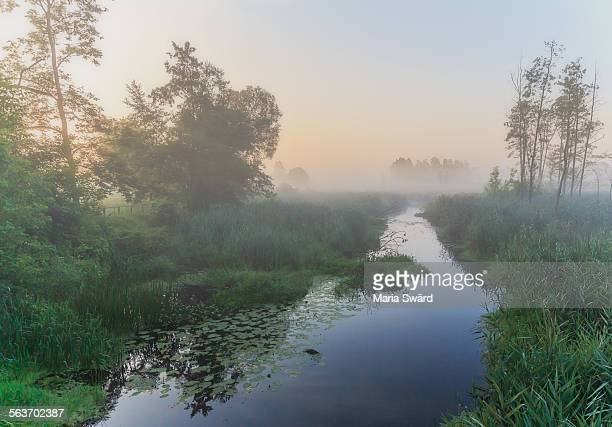 bialowieza forest - beautiful sunrise - bialowieza forest imagens e fotografias de stock