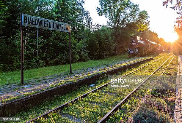 bialowieza forest - historical train station - bialowieza forest stock pictures, royalty-free photos & images
