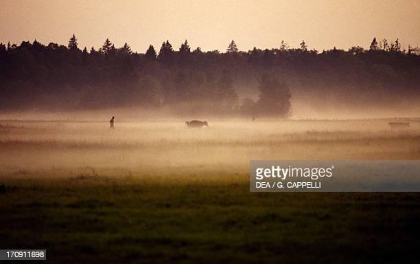 Bialowieza Forest National Park , Poland.