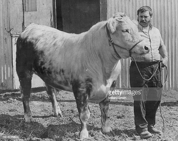 MAY 19 1972 MAY 20 1972 JAN 5 1985 FEB 11 1995 DEC 31 1999 Bib Mac grand champion of the 1972 National Western Stock Show until being dethroned in...
