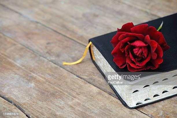 Bibel & Rote rose