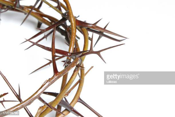 Bible Series Crown of Thorns (with copyspace)