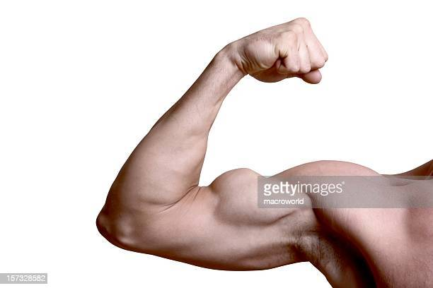 Bicep isolated
