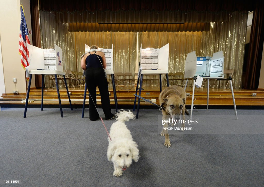 A Bichon Frise named Lambchop (C) and a Mutt named Coffee wait for their owner Claudia Kunin as she votes in the Los Angeles mayorla run-off race at Allesandro Elementary School on May 21, 2013 in the Silver Lake area of Los Angeles, California. In what could be a record-low voter turnout, Garcetti is up against Los Angeles City Controller Wendy Greuel for the seat held by two-term mayor Antonio Villaraigosa.
