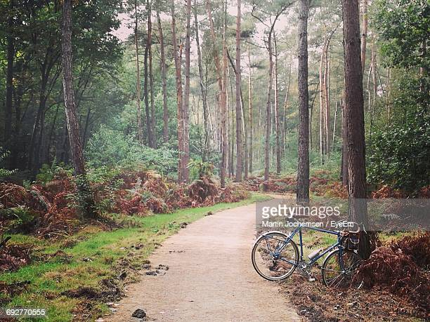 Bicycle Amidst Trees In Forest