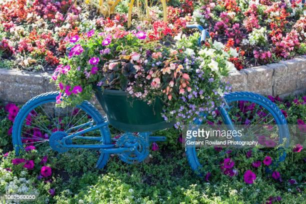 bicycle & flowers, england - プール湾 ストックフォトと画像