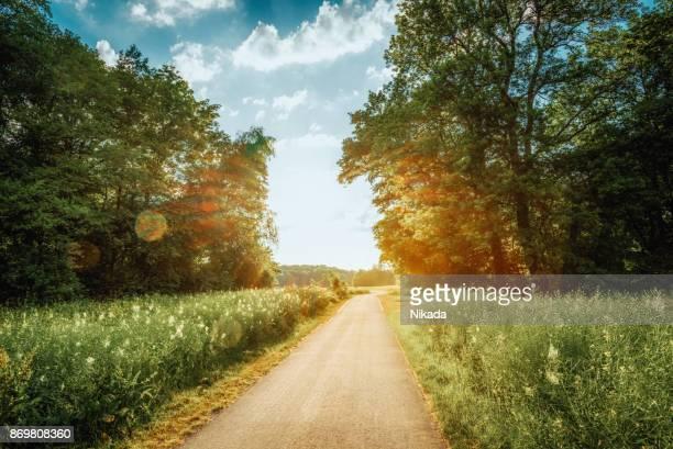 fahrradweg entlang der wiese umgeben von wald - weg stock-fotos und bilder