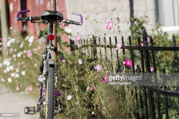 A bicycle leaning against a pole surrounded by full of cosmos flowers