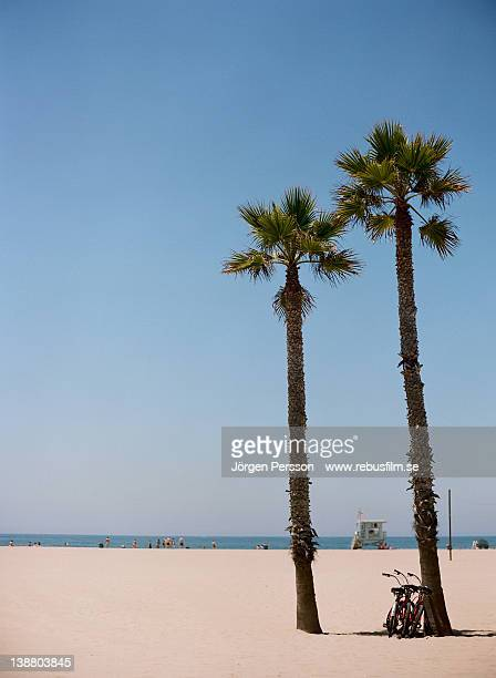 Bicycle leaning on palm tree at beach