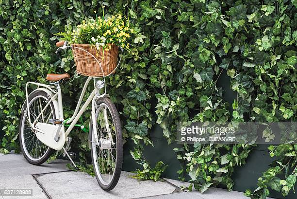 Bicycle with flowers in front basket against a leaves wall