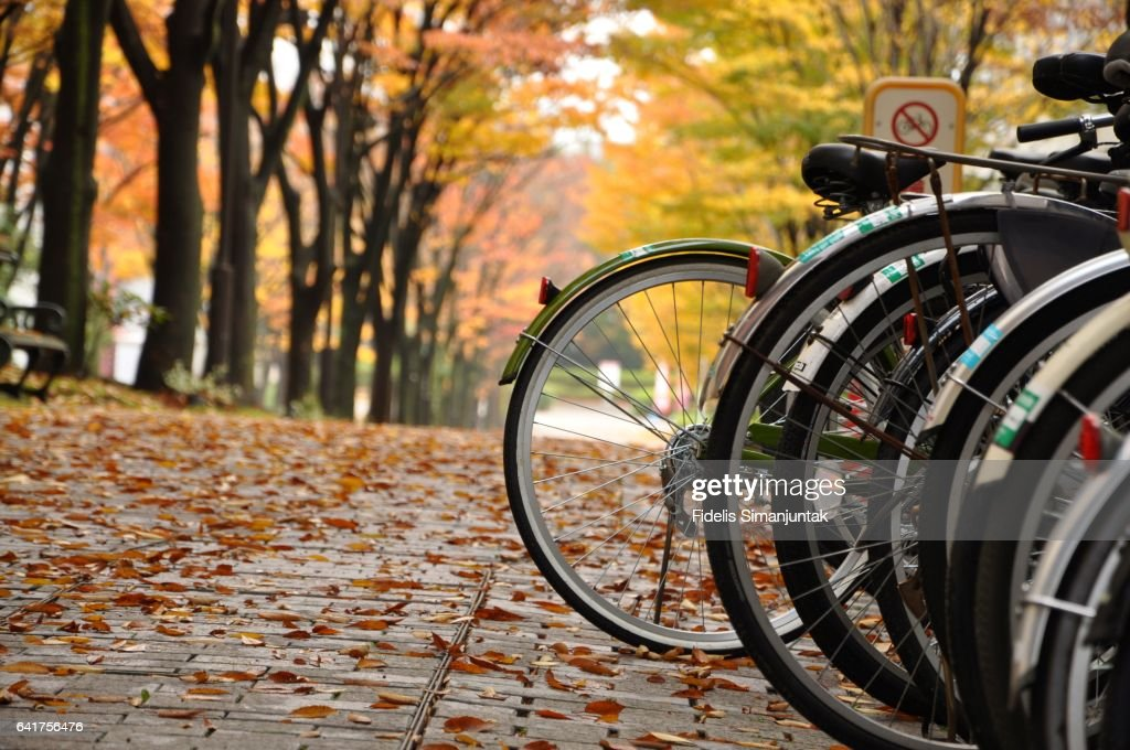 Bicycles parked in a park with autumnal colors in the background : ストックフォト