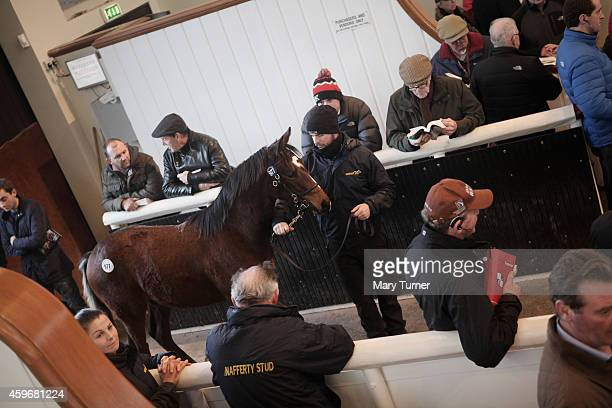 Bidders at Tattersalls Auctioneers admire a foal known only as Lot 977 before the young bay colt is sold on November 28 2014 in Newmarket England...