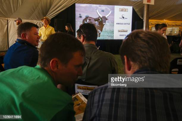 Bidders discuss the auction as a screen displays 'Lot 37 Ankole Cattle' during the 13th annual Stud Game Breeders auction at Zebula Country Club in...