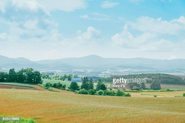 biei landscape - 郊外の風景 ストックフォトと画像