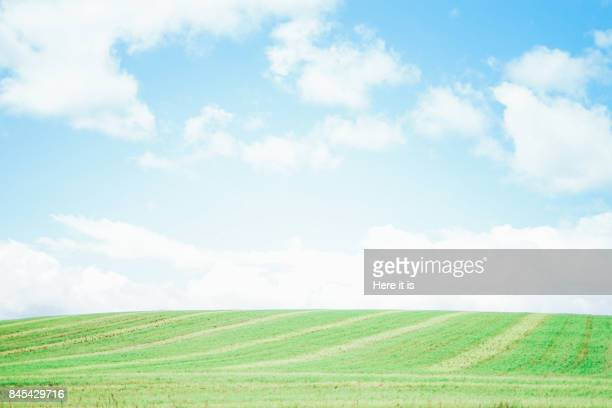 biei landscape - grass area stock pictures, royalty-free photos & images