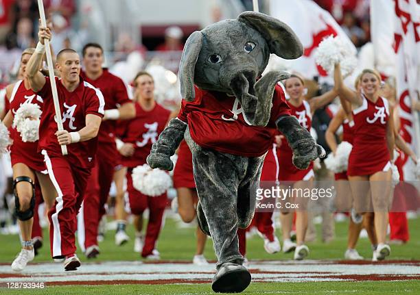 Big Al mascot of the Alabama Crimson Tide runs out on the field during pregame prior to facing the Vanderbilt Commodores at BryantDenny Stadium on...