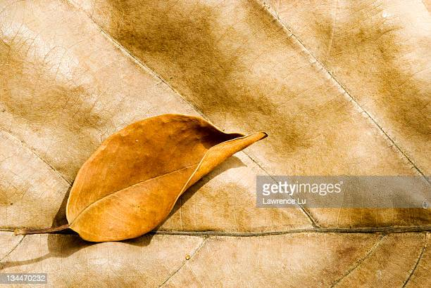 Big and small dry leaves