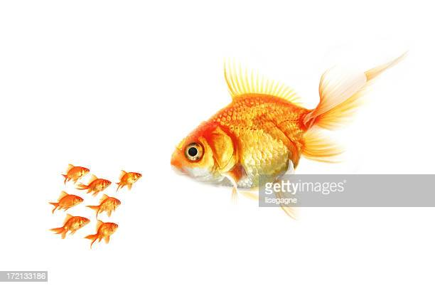 big and small - big fish stock pictures, royalty-free photos & images