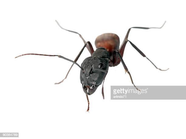 Big ant 08