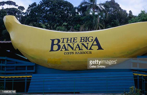 """""""big banana"""" tourist attraction. - coffs harbour stock pictures, royalty-free photos & images"""