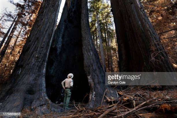 Big Basin Redwoods State ParkNov. 5, 2020The Big Basin Redwoods State Park was hit by a wildfire in August that burned roughly 97% of the parks...
