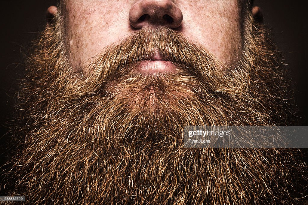 Big Bearded Man Portrait : Stock Photo