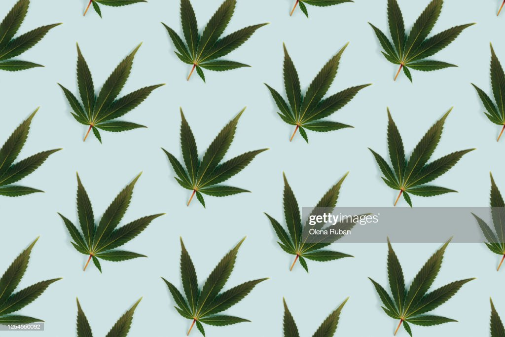 Big beautiful green leaf of marijuana close up : Stock Photo