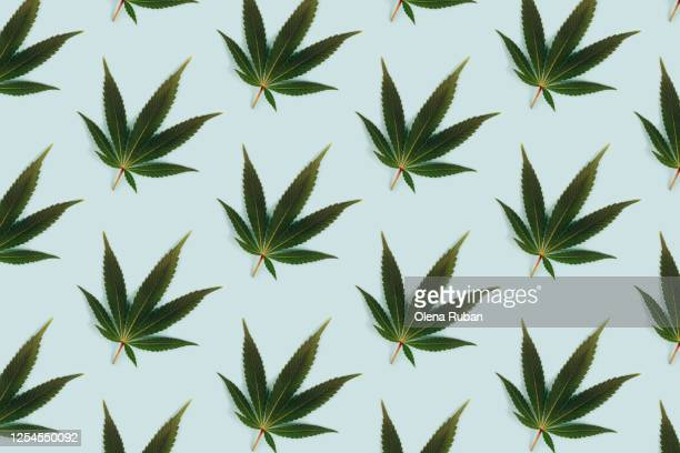 big beautiful green leaf of marijuana close up - cbd oil stock pictures, royalty-free photos & images