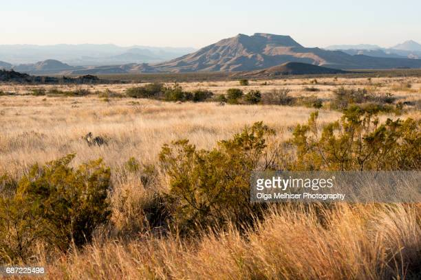 big bend national park, west texas, usa - big bend national park stock pictures, royalty-free photos & images