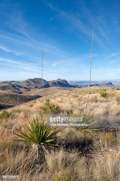 big bend national park, west texas, usa - chihuahua desert stock pictures, royalty-free photos & images