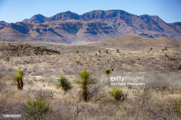 big bend - big bend national park stock pictures, royalty-free photos & images
