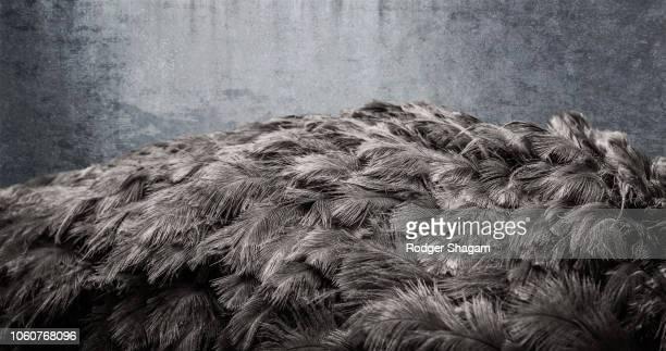Big bird. Ostrich.