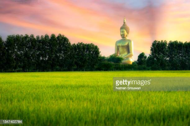 big buddha in wat muang, thailand - biggest stock pictures, royalty-free photos & images
