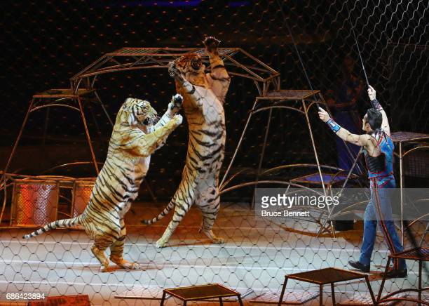 Big Cat Trainer and Presenter Alexander Lacey performs on the final day of the Ringling Bros Barnum and Bailey Circus on May 21, 2017 in Uniondale,...