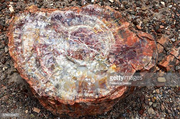 big colorful petrified wood, petrified forest national park, arizona - petrified wood stock pictures, royalty-free photos & images