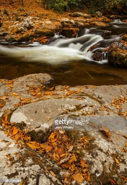 Big Creek, Great Smoky Mountains