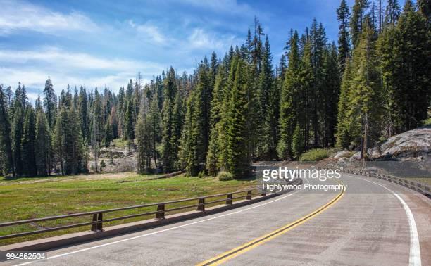 big curve through the big trees - highlywood - fotografias e filmes do acervo