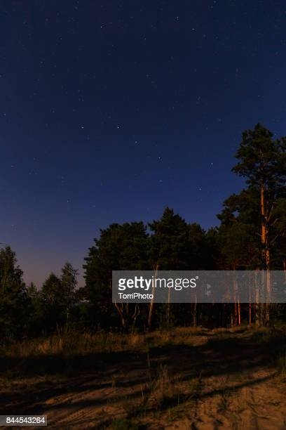 Big Dipper Constellation, Ursa Major, The Great Bear in forest night