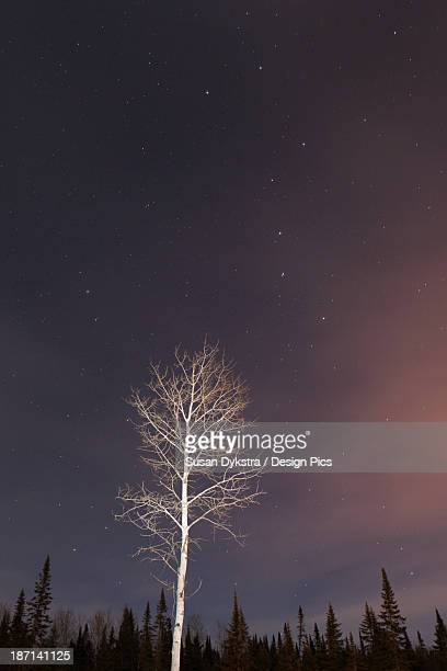 big dipper in the night sky with a lone tree illuminated - bamboo dipper stock photos and pictures