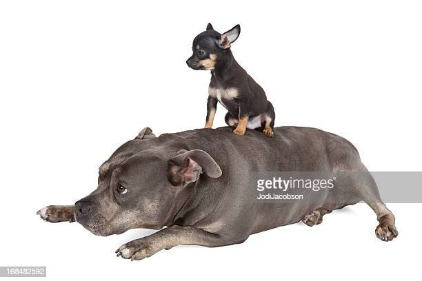 Big dog Little puppy Take me for a ride