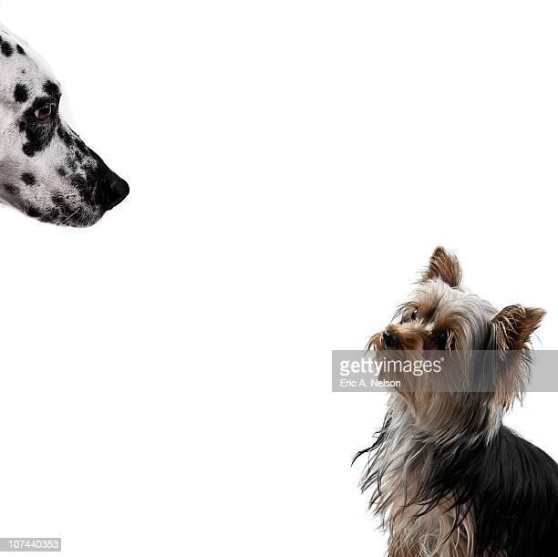 Big dog looking at little dog