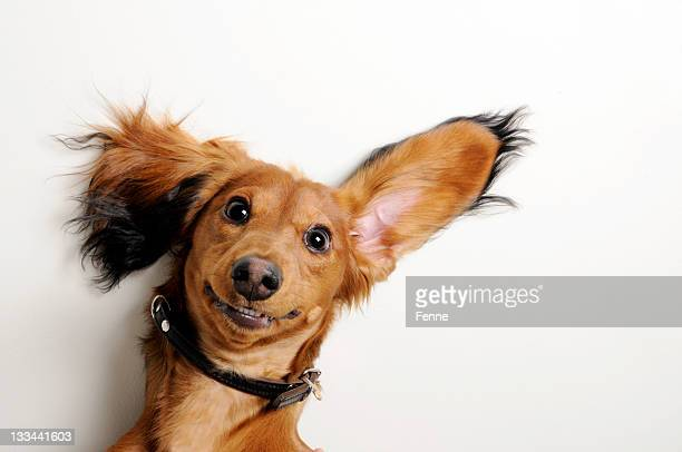 big ears, upside down. - smiling stockfoto's en -beelden