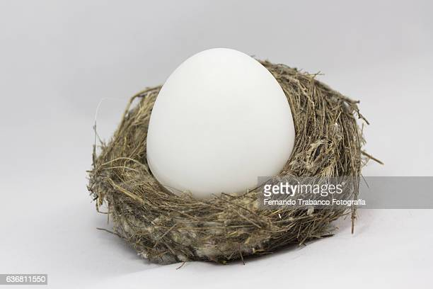 Big egg in a nest