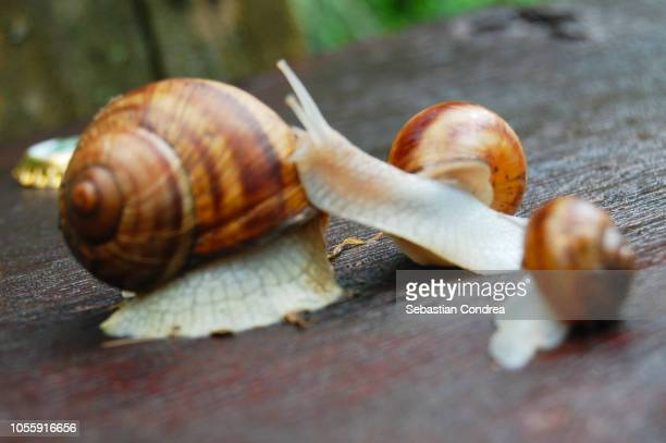 big family of snails, when we all go on vacation, animals, romania - sebastian grey stock pictures, royalty-free photos & images